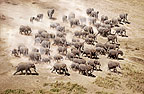 Aerial of African elephants, Amboseli National Park, Kenya