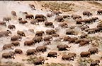 African elephant herd seen from the air, Amboseli National Park, Kenya