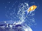 Goldfish leaping out of bowl (conceptual composite image)