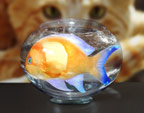Large goldfish in bowl being watched by cat (conceptual composite image)