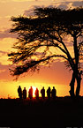 Group of Maasai men at sunrise, Kenya