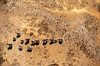 Aerial view of African elephants, Amboseli National Park, Kenya