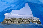 Emperor penguins and ice arch, Atka Bay rookery, Antarctica
