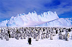 Emperor Penguin colony, Auster EP Rookery, Antarctica