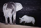 African elephant and rhinoceros beside waterhole at night, Etosha National Park, Namibia