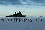 Adelie penguins, with icebreaker in the background, Cape Adare, Antarctica