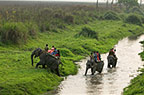 Group of people crossing a river on elephant back, Kaziranga NP, India