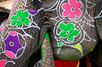 Elephant painted in preparation for the Elephant Festival, Jaipur, India