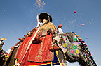 Elephant festival, Jaipur, India, with people throwing coloured paper from the back of a decorated elephant.