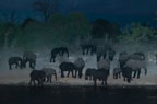 African elephants at waterhole at night, Savute, Botswana