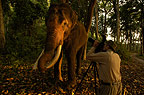 Steve Bloom photographing elephant in India