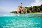 Indian elephant with mahout stanidng in the sea, Andamans, India