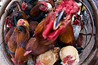 Chickens in a street market, Addis Ababa, Ethiopia, Africa.