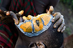 Suri child having face painted with coloured clay, Omo Delta, Ethiopia