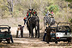 Tourists climbing onto an Indian elephant, Bandhavgarh National Park, India