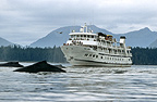 Whale watching boat and whales, Southeast Alaska