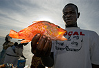 Fisherman holding a fish, Yoff, Dakar, Senegal, west Africa