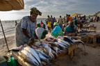 Women selling fish on the beach, Yoff, Dakar, Senegal, west Africa