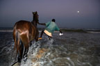A fish trader washing his horse in the sea under full moon, St Louis, Senegal, West Africa