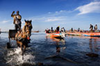 Fish trader in a high-wheeled cart in the water, collecting fish from the returning fishing boats, Joal, Senegal