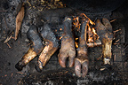 Pigs' trotters cooking on an open fire, Nairobi, Kenya.