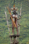Village leader in lookout post, Dani tribe, New Guinea, Indonesia.