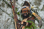 Village leader of the Yafi tribe, New Guinea Island,  Indonesia.
