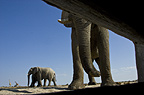 African elephants photographed from inside hide, Etosha National Park, Namibia.