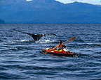 Duncan Murrell photographing humpback whales from his kayak in Alaska