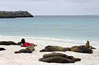 Galapagos sealions and tourist, Espanola (Hood) Island, Galapagos Islands, Ecuador, South America.