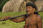 Huaorani man, Ahua Baiwa, with his blowgun. Bameno Community, Yasuni National Park, Amazon rainforest, Ecuador, South America.