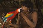 Huaorani Indian man, Megatowe Ontogamo, with his pet scarlet macaw (Ara macao). Gabaro Community, Yasuni National Park, Amazon rainforest, Ecuador, South America.