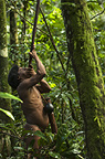 Huaorani Indian, Oña Yate, hunting with his blowgun. Gabaro Community, Yasuni National Park, Amazon rainforest, Ecuador, South America.