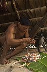 Huaorani Indian, Tage Kaiga, making feather crown using feathers from parrots, toucans and macaws. Gabaro Community, Yasuni National Park, Amazon rainforest, Ecuador, South America.