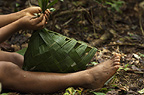 Huaorani Indian girl, making a basket from palm leaves which will be used once then discarded. Gabaro Community, Yasuni National Park, Amazon rainforest, Ecuador, South America.