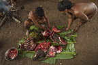 Huaorani Indians butchering a peccary which they will either boil or smoke. Bameno Community, Yasuni National Park, Amazon rainforest, Ecuador, South America.