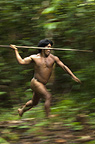 Huaorani Indian hunting Large terrestrial game (peccary or tapir) with a lance made from the stem of a palm tree. Bameno Community, Yasuni National Park, Amazon rainforest, Ecuador, South America.