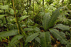 Rain Forest Understory, Yasuni National Park Biosphere Reserve, Amazon, Ecuador