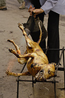 Butchered dog for eating.  Yuanyang, Honghe Prefecture, Yunnan Province, China