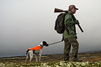 Grouse hunting, hunter with dog Kvikne, Hedmark, Norway,
