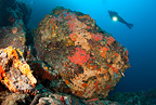 Scuba diver and big rock covered with red encrusting sponges, Ischia Island, Italy, Tyrrhenian Sea, Mediterranean
