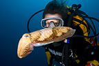 Scuba diver with cuttlefish, Madeira Island, Portugal, Atlantic Ocean