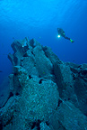 Scuba diver, rocky bottom, breams, Madeira Island, Portugal, Atlantic Ocean