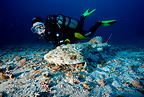 Scuba diver and long-spined anglerfish, Marettimo Island, Egadi group, NW coast of Sicily, Mediterranean Sea, Italy