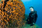 Scuba diver and wall covered with Yellow Cluster Anemone, Vervece rock, Punta Campanella, Massa Lubrense, Italy, Tyrrhenian Sea