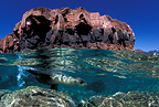 Island out of La Paz and California sea lion, Sea of Cortez, Baja California, Mexico, East Pacific Ocean