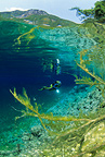 Scuba diver and tree branches, nature reserve, Cornino Lake, Friuli, Italy