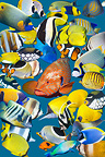 Montage of colourful tropical reef fish, with a Coral hind in centre.