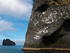 Kittiwake colony at elephant head formed cliff, May, Heimaey, Iceland