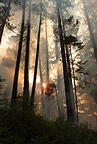 The sun shines through smoke on a wildfire on the Umpqua National Forest, Oregon, USA